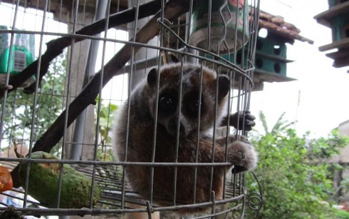Người dân tự nguyện chuyển giao động vật hoang dã...